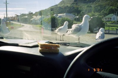 Sandwiches and seagulls