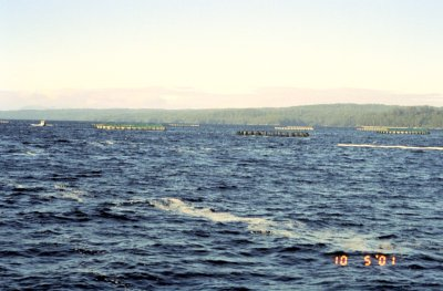 The Salmon Farms, MacQuarie Harbour